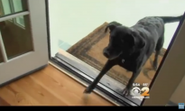 Dog brought back to the same shelter twice by owners, gets a new home from unexpected rescuer