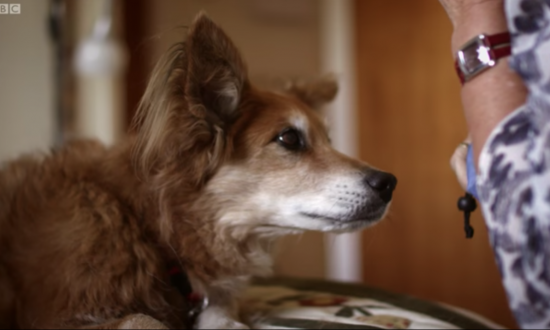 Dog becomes depressed and won't stop sniffing owner's chest — you won't believe why