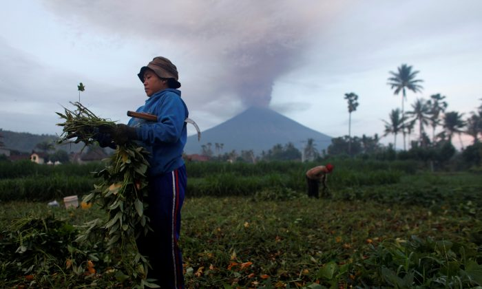 Farmers tend their crops as Mount Agung erupts in the background in Amed, Karangasem Regency, Bali, Indonesia, November 27, 2017. (Reuters/Nyimas Laula)