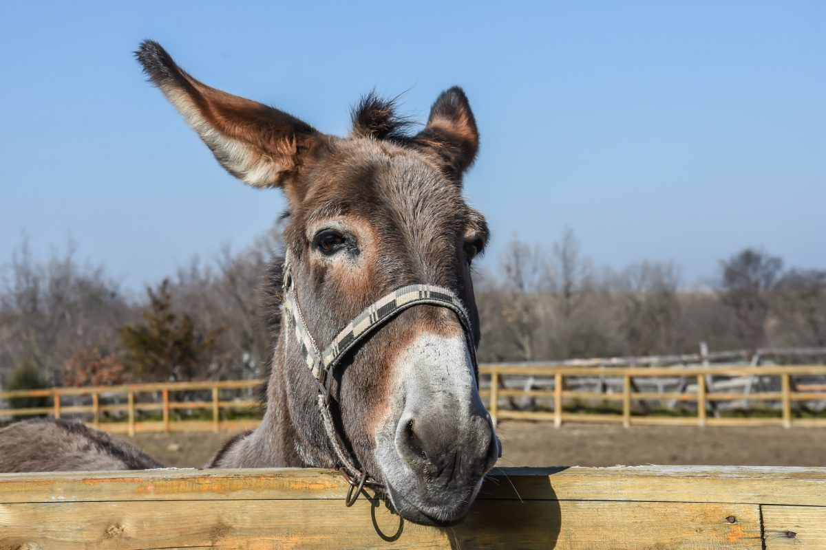 donkeys put in jail for eating expensive plants the epoch times. Black Bedroom Furniture Sets. Home Design Ideas