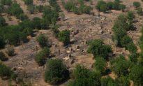 Four Dead in Ambush of World Food Programme Convoy in Nigeria