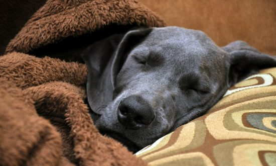 Dog always wanders into a stranger's home to take a nap, then she finds a note on his collar