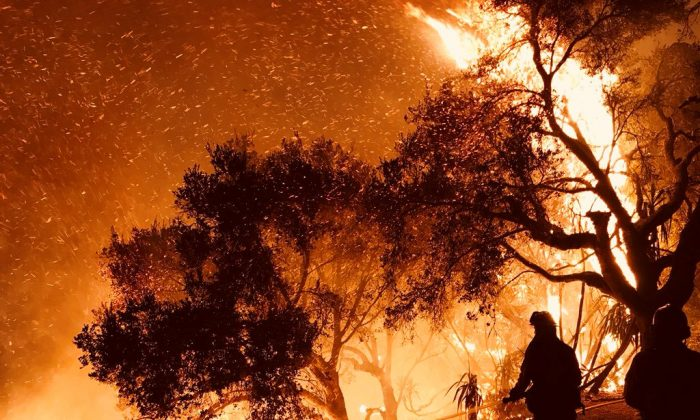 Firefighters knock down flames as they advance on homes atop Shepherd Mesa Road in Carpinteria, California, U.S. Dec. 10, 2017.  (Reuters/Mike Eliason/Santa Barbara County Fire Department/Handout via Reuters)