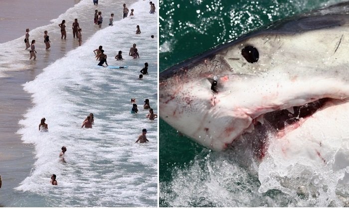 Around 20 people die per year due to rip currents in waters off Australian beaches. One person on average dies per year in Australia by an unprovoked shark attack. (Surf scene: William West/AFP/Getty Images. Shark: Dan Kitwood/Getty Images)
