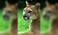 TV Presenter Sparks Outrage After Hunting a Mountain Lion and Taking Trophy Kill Photos