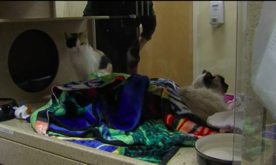 Shelter worried no one would adopt cat. Then they realized he couldn't leave behind best friend