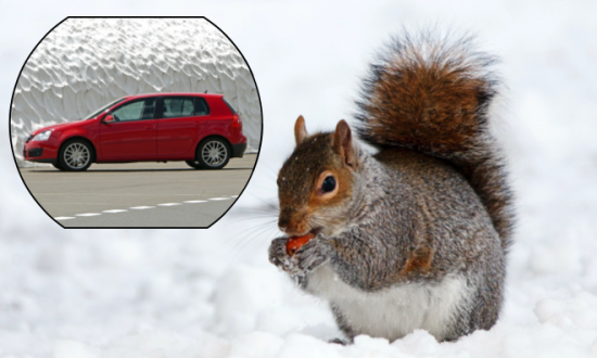Driver Takes Faulty Car to Mechanic and Finds out Squirrel Stashed Hundreds of Acorns in Gearbox