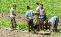 North Korean Soldiers Given Leave to Collect Food: Report