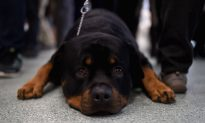 These Are the Riskiest Dog Breeds for People to Own