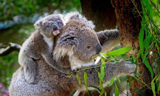 Wildlife Encounters on the Way to Work – in Australia of Course
