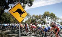 Tourist Snaps Hilarious Photo of Kangaroo Striking Seductive Pose
