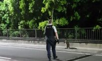 Wayward Wallaby Gets the Jump on Police in Sydney Harbour Bridge Chase