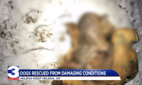 Dog Found Frozen to Death Outside Arkansas Home