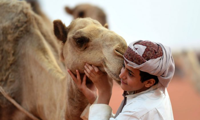 A Saudi boy poses for a photo with a camel at the annual King Abdulazziz Camel Festival in Rumah, some 150 kilometres east of Riyadh, on March 29, 2017. 