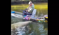 Jaw-Dropping Footage as Manatee Pushes Canoe