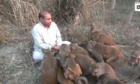 Indian Man Is Swarmed by Pack of Monkeys as He Feeds Them Peanuts