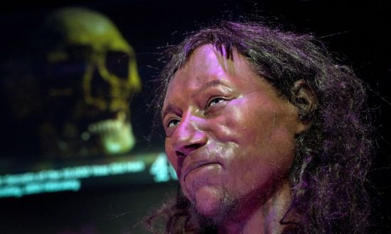 A full face reconstruction model made from the skull of a 10,000-year-old man, known as Cheddar Man, Britain's oldest complete skeleton. Photo taken at the National History Museum in London on Feb. 6, 2018. (Justin Tallis/AFP/Getty Images)