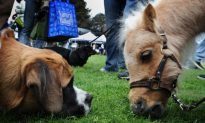 'Guide Horse' Trained to Help Blind Man With Fear of Dogs