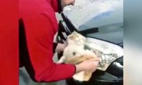 Man Uses Cat as Sponge to Wash Car