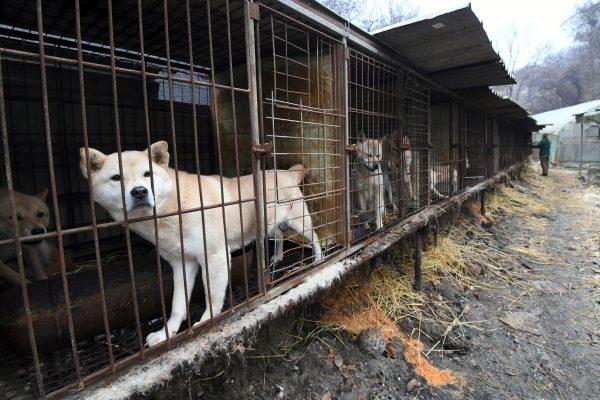 South Korean Restaurants Near The Olympic Stadium Still Serving Dog Meat