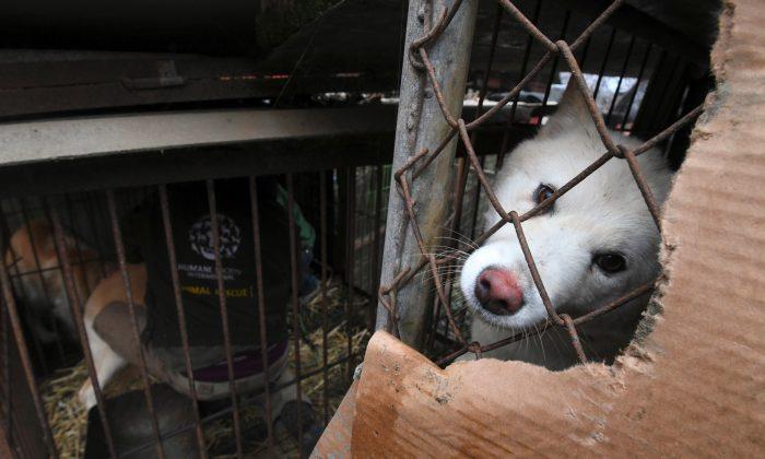 Dog meat restaurants in South Korea still serving during Winter Olympics