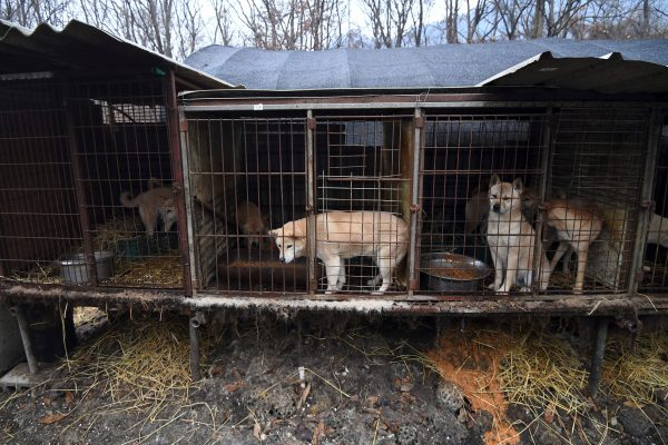 Dog meat restaurants in South Korea still serving during Winter Olympics