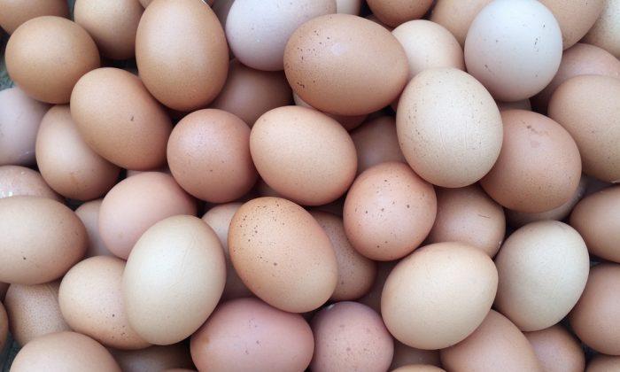 Eggscellent. (Shutterstock)