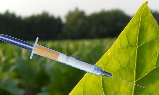 Smokin' New Technology to Produce Flu Vaccines