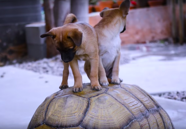 Картинки по запросу Черепахи