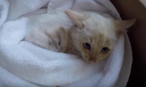 Family discover kitten that had nearly frozen to death. But hours later—they find mind-blowing thing