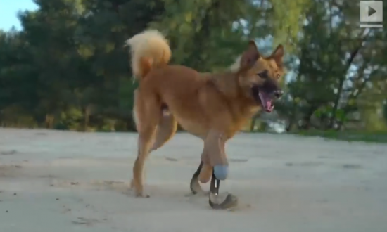 Dog Gets Hi-tech 'Blade Runner' Legs After Being Maimed With Sword