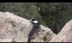 Husky found trapped at the edge of the cliff—but when the rescue—i'm holding my breath