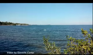 A dolphin sighting in the ocean is rare enough—but you've never seen one like this before