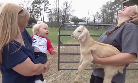 Toddler & baby goat start communicating with each other. But what they say has everyone cracking up