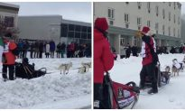 Sled Driver Takes a Spill in Trail Sled Dog Race
