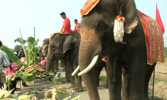 Elephants Treated to a Fruit Buffet on Thai National Elephant Day