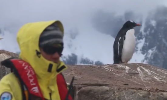 The World's Most Remote Post Office Is Looking for Staff—you May Have to Help Count Penguins Too