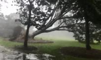 Tree Crashes Down as Cyclone Marcus Sweeps Through Darwin, Australia