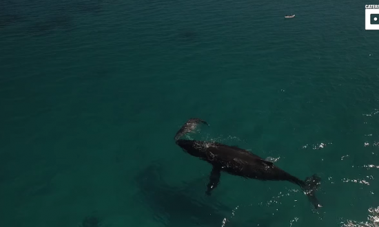 Sailors excited when they capture whale on camera. But what thing next to it does—it's even better
