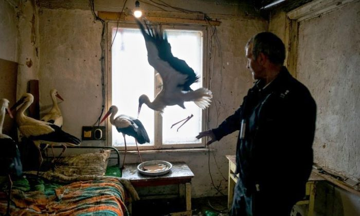 Safet Halil, 53, stands next to the five storks he saved in the village of Zaritsa on March 21, 2018. (Dimitar Dilkoff/AFP/Getty Images)