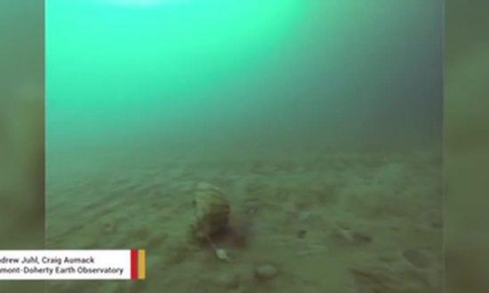 Scientists Capture Ancient Arctic Jellyfish on Camera