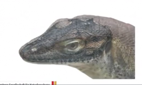 Scientists Reveal This Now-Extinct Lizard Had Four Eyes