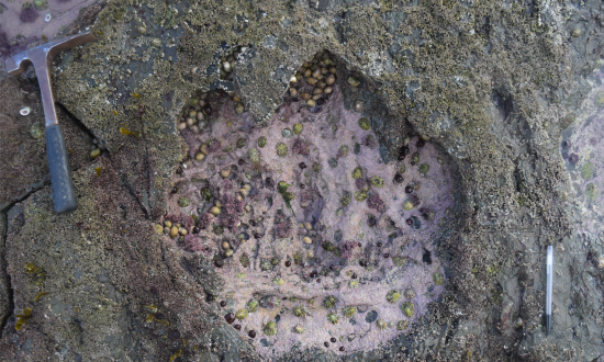 Scientists Find Massive Footprints, Here's What Ancient Creatures It Belonged To