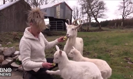 Goat Jumps Fence, Runs Away—5 Months Later Gives Birth to Something Extremely Rare