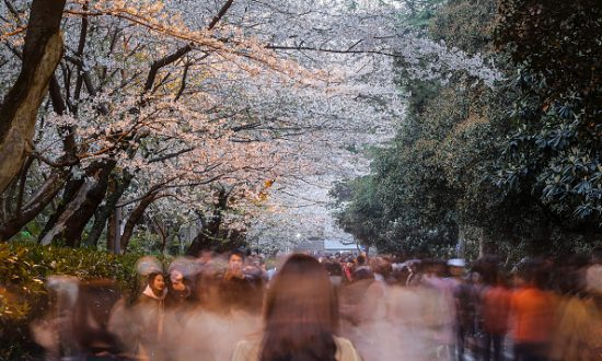 The views cherry blossom on campus of Wuhan University on March 22, 2018 in Wuhan of Hubei Province, China. (Wang HE/Getty Images)