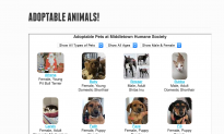 NY State Approves Grants To Help Renovate 14 Animal Shelters