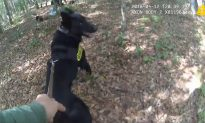 K-9 Takes Down His First Suspect—Here's the Bodycam Video