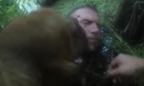 Police Dog Can't Resist Licking Suspect's Face