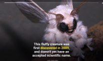 Top 10 Weird-Looking Creatures You've Never Seen Before