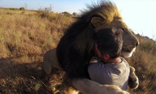 Man is in wild lands of Africa, what lion does when it runs up to him—I'm holding my breath